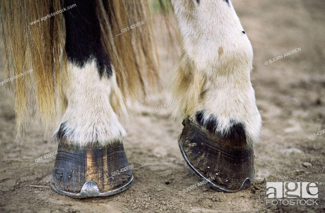 Stock Photo: Horse hoofs.