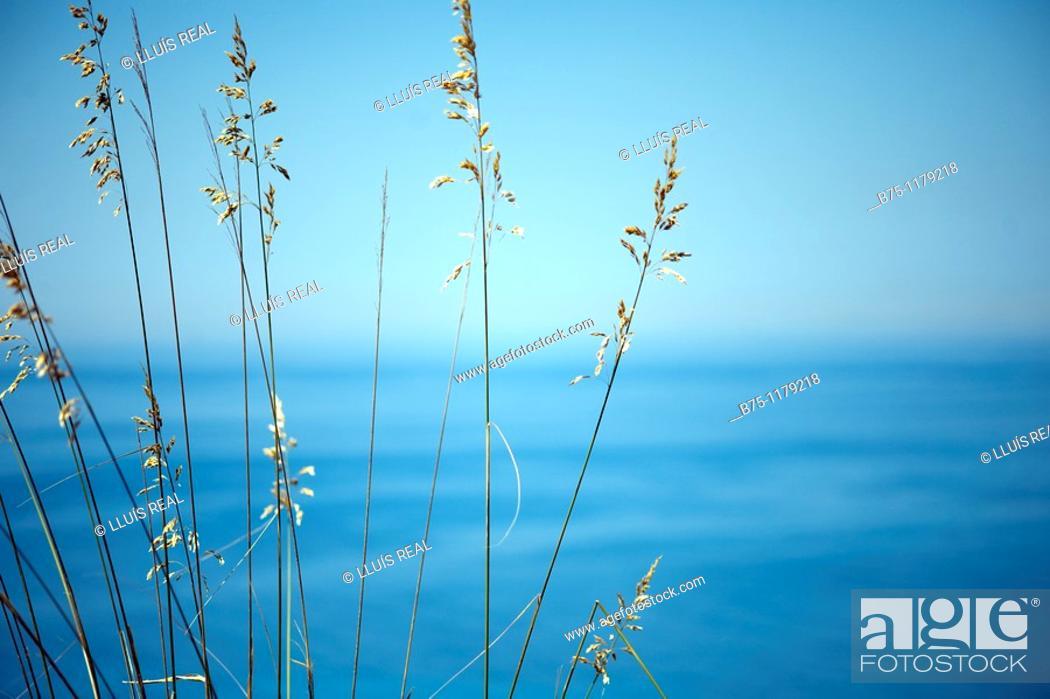 Stock Photo: Mediterranean, Balearic Islands, Minorca.