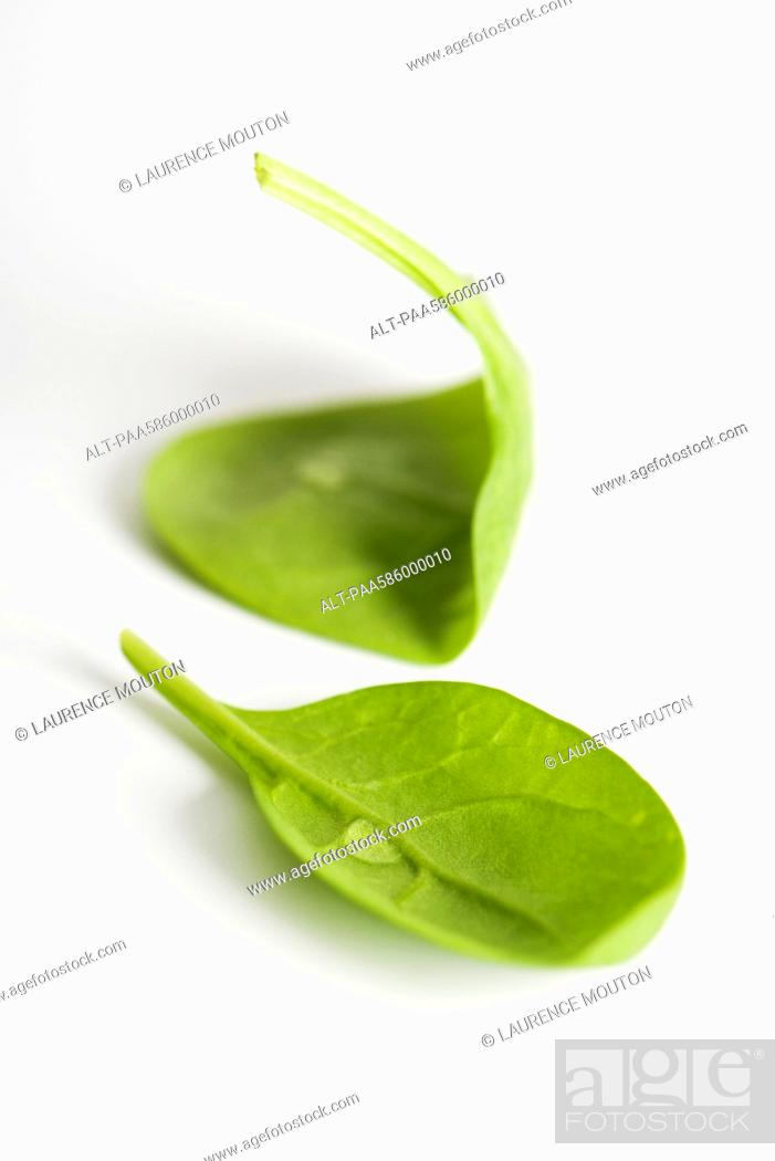Stock Photo: Fresh baby spinach.