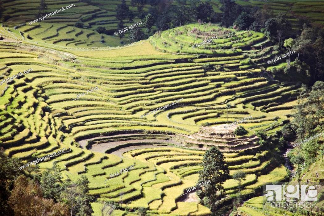 Imagen: Terraced fields as seen in winter from Nagarkot, Himalayas, Kathmandu valley, Nepal, Asia.