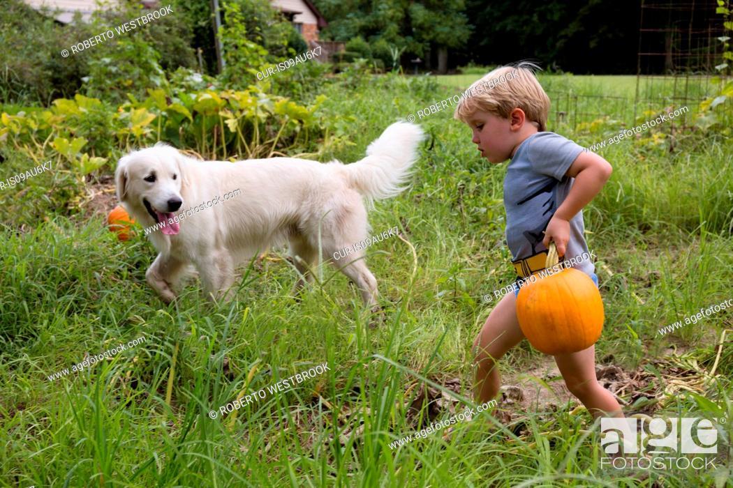 Stock Photo: Boy with dog carrying heavy pumpkin on fruit farm.