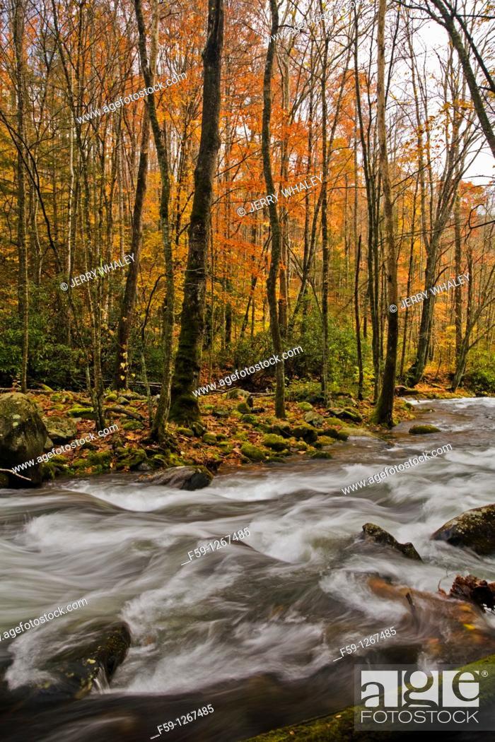 Stock Photo: River, Oconaluftee area, Great Smoky Mtns National Park, NC.