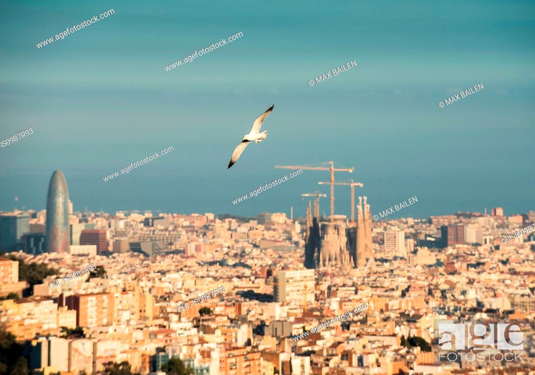 Stock Photo: Cityscape view with flying gull and Sagrada Familia, Barcelona, Spain.