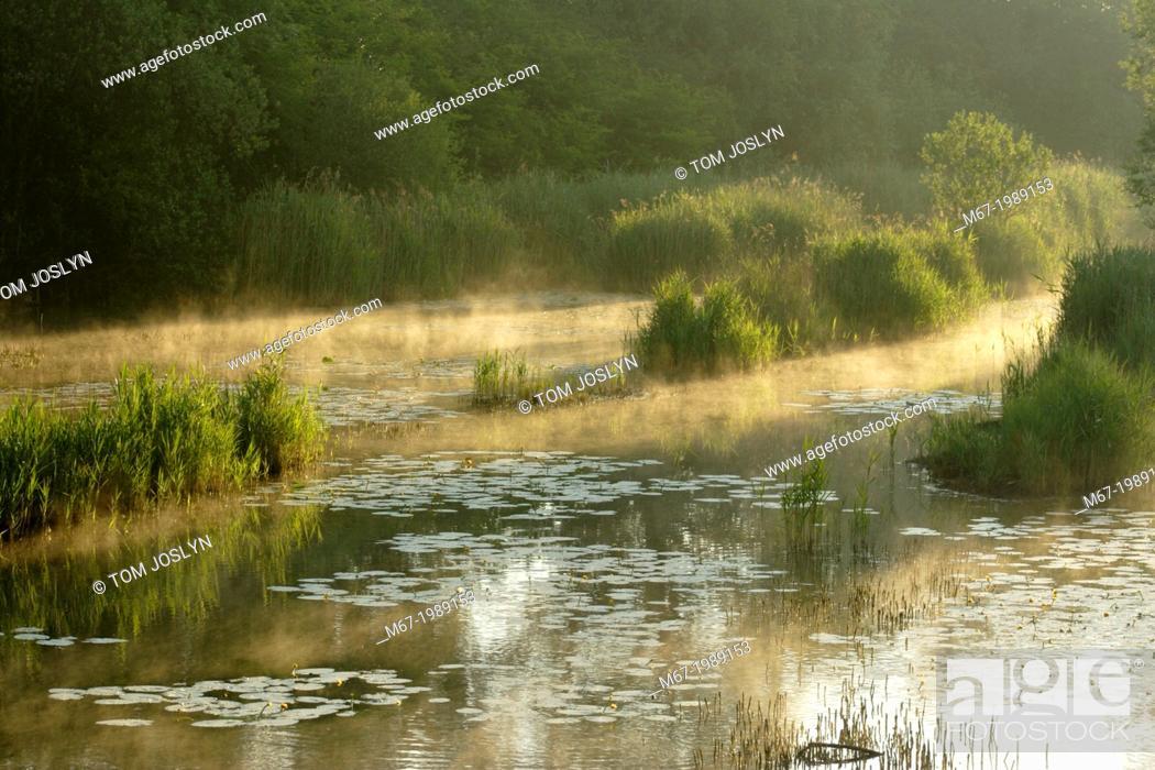 Stock Photo: Mist rising off Fenland lake, Manea, Cambridgeshire, England, UK.