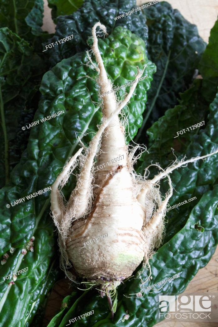 Stock Photo: A parsnip and leaves of chard.