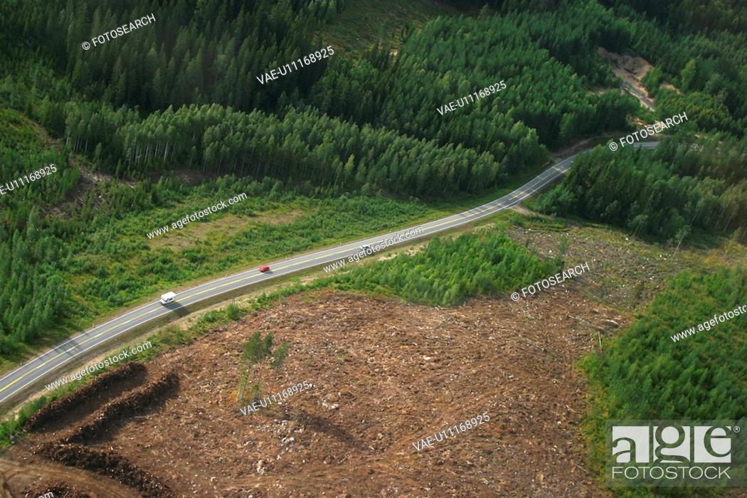 Stock Photo: road, way, highway, country, countryside, forest.