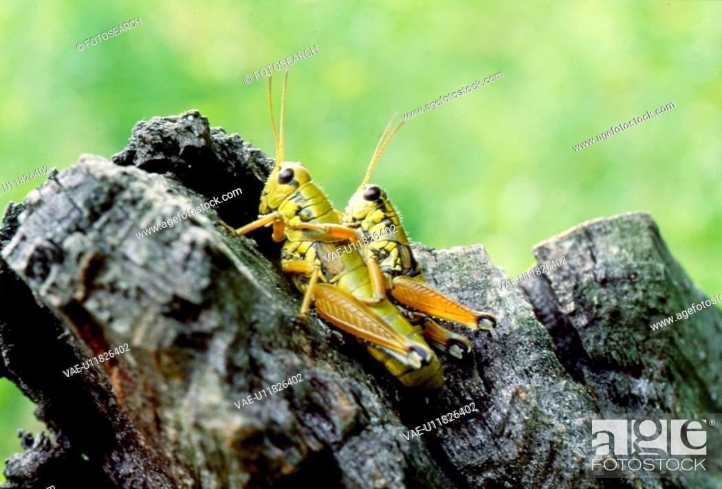 Stock Photo: wild animal, nature, tree stump, couple, scene, animal, landscape.