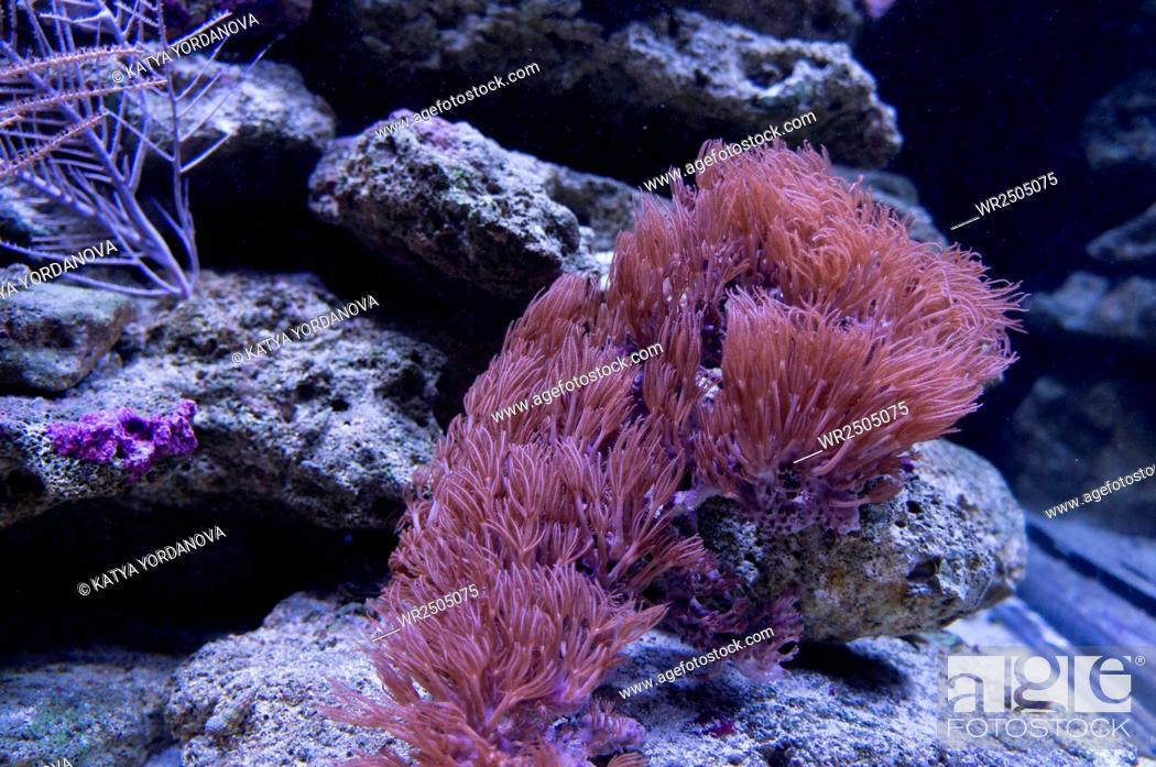 Imagen: Coral.