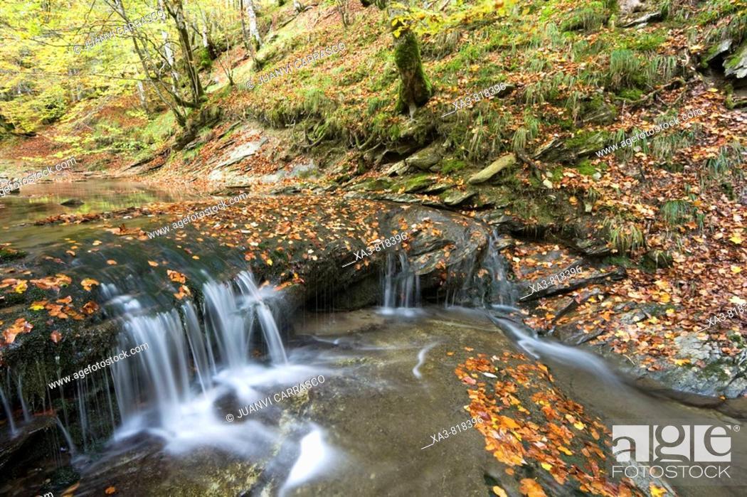 Photo de stock: Stream at autumn, Selva de Irati forest, Navarra, Pyrenees, Spain.