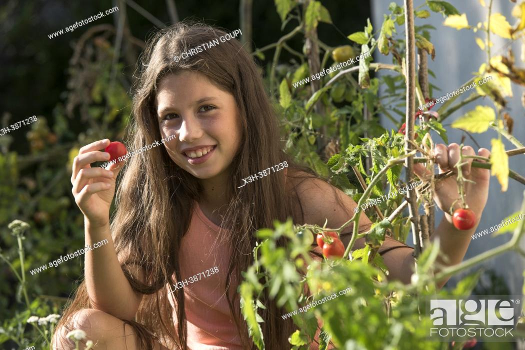 """Photo de stock: Young girl in a pink-orange tank top picking """"""""cocktail"""""""" tomatoes in a garden, France."""