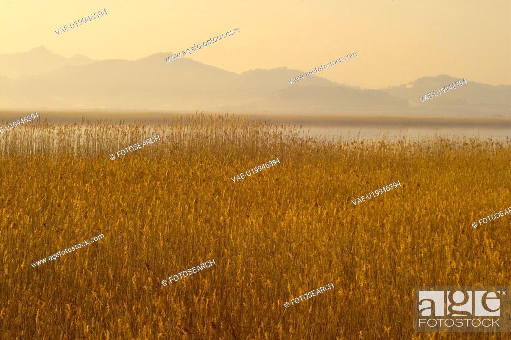 Stock Photo: eulalia, field, plant, scenery, nature, plants, mountain.
