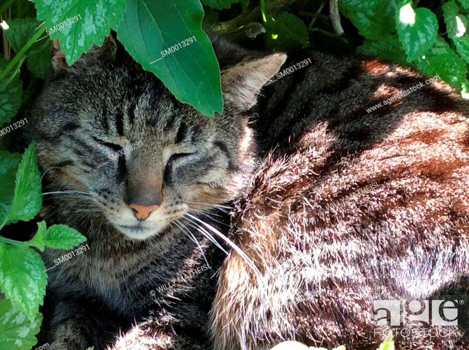 Imagen: cat sleeping in garden.