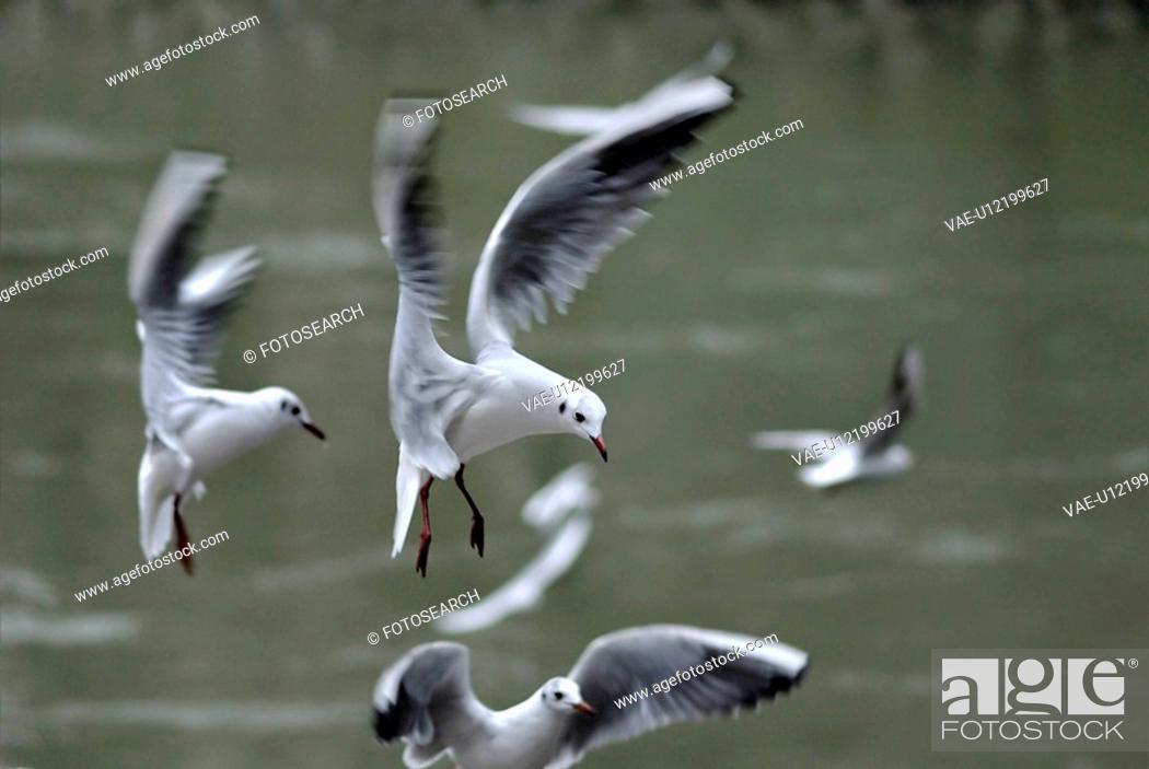 Stock Photo: animalisch, acrobatic, animal, alexander, air, acrobat.