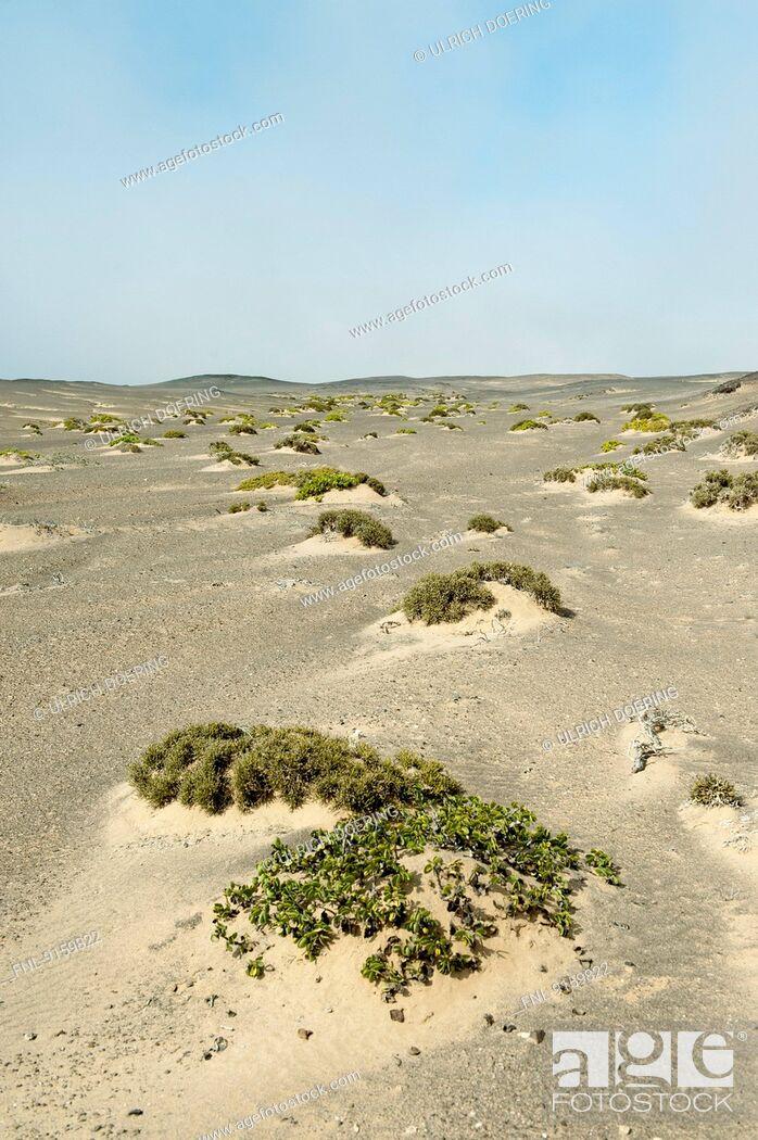 Stock Photo: Sand dunes with sparse vegetation, Skeleton Coast National Park, Namibia.