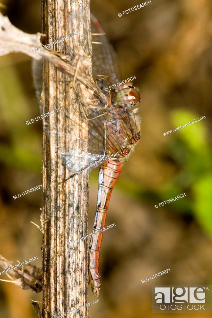 Stock Photo: Close-up to a dragonfly.