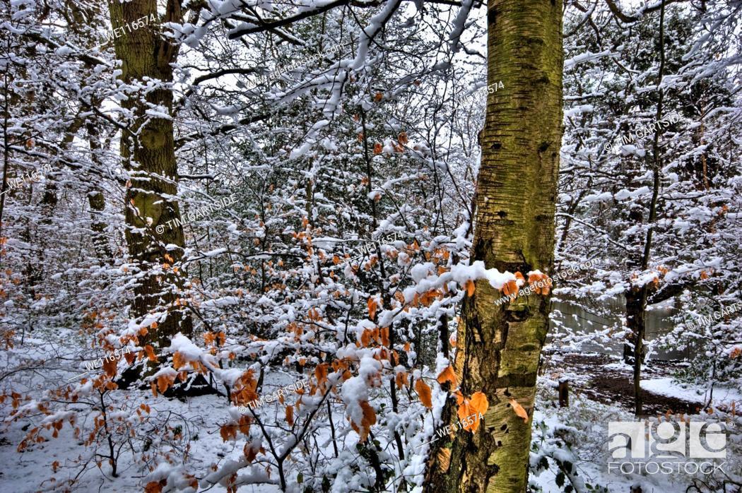 Stock Photo: Snow, winter, Kent, England, UK, Europe.