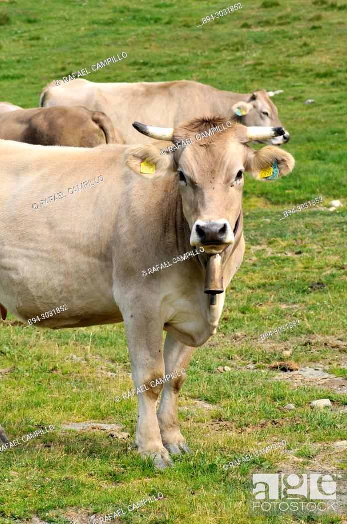 Stock Photo: Caws. Andorra, Europe.