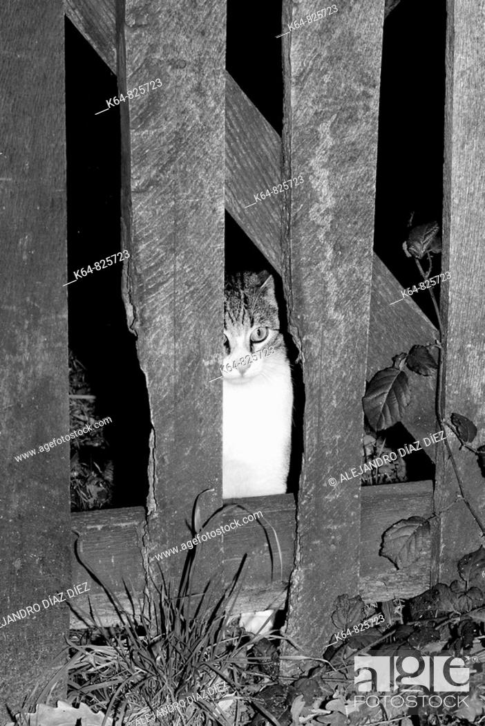Stock Photo: Cat behind fence.