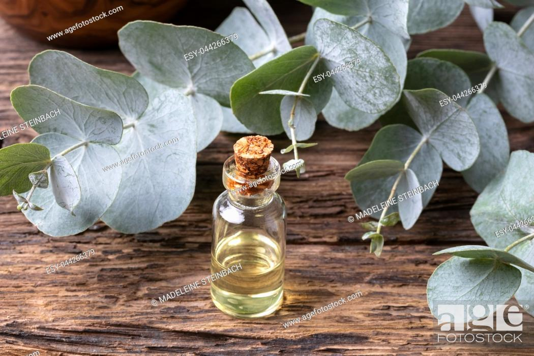 Stock Photo: A bottle of essential oil with fresh eucalyptus leaves.