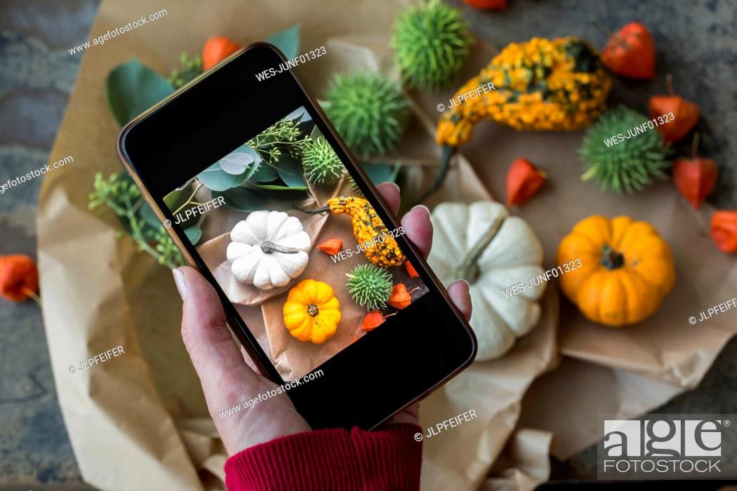 Stock Photo: Autumnal decoration, ornamental pumpkins, woman taking photo with smartphone.