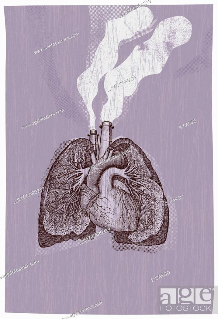 Stock Photo: Lungs with smoke coming out of them.