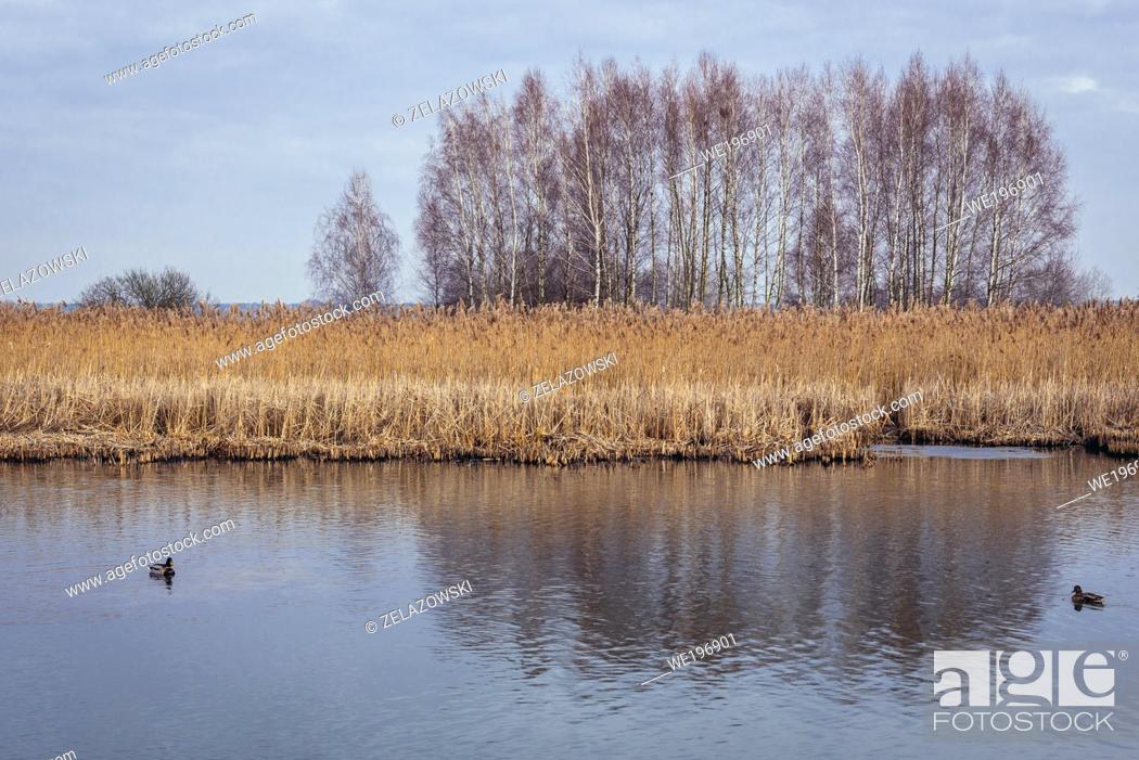 Stock Photo: Wieliszewskie Lake in Wieliszew village in Legionowo County, Masovian Voivodeship of Poland.