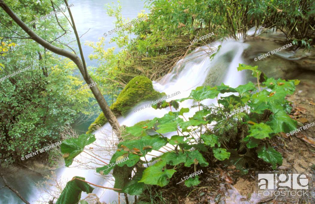 Stock Photo: Lush vegetation is abundant as are waterfalls in the Plitvice Lakes National Park. Croatia.
