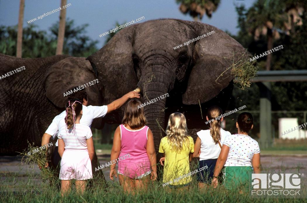Children Meet Af Elephants At Zoo Camp Busch Gardens Tampa Fl
