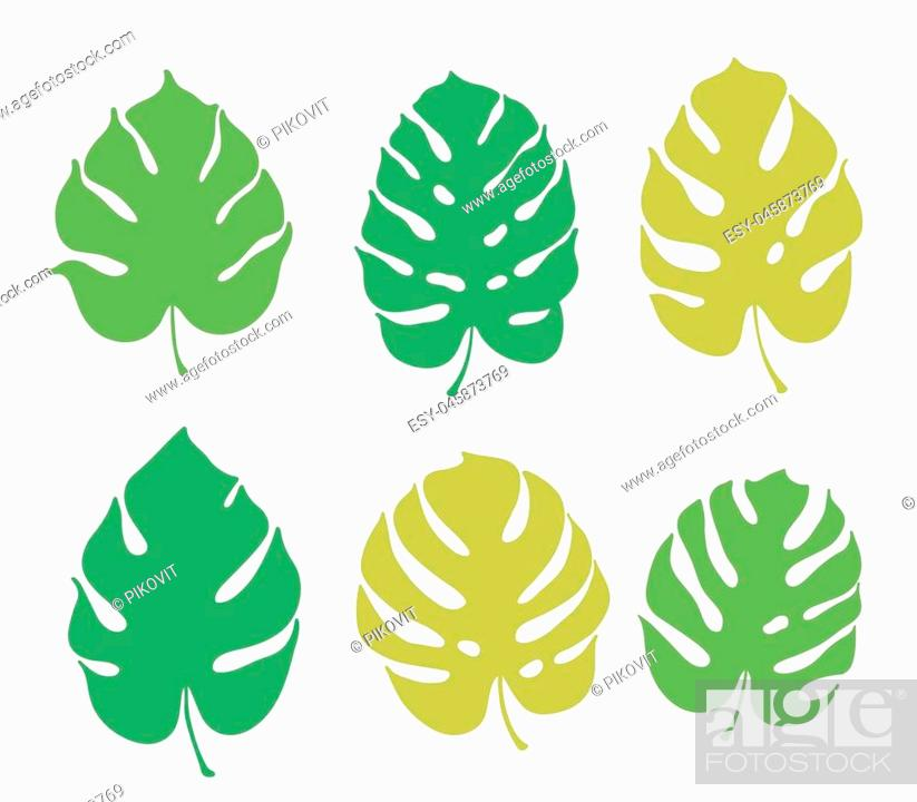 Vector Botanical Illustration Of Monstera Leaf Isolated Outline Drawing Stock Vector Vector And Low Budget Royalty Free Image Pic Esy 045873769 Agefotostock Fern, maple leaf, tropical foliage, nature illustrations. https www agefotostock com age en stock images low budget royalty free esy 045873769