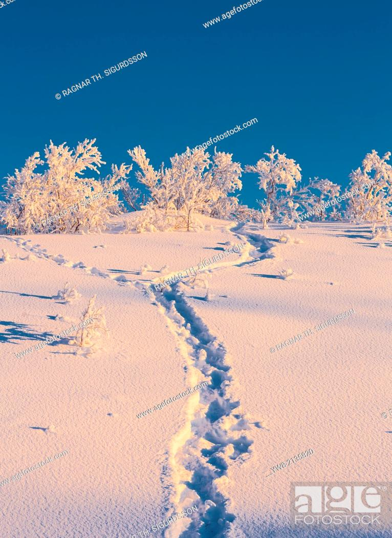 Stock Photo: Snow crystals on trees in winter, Lapland, Sweden. Cold winter in Lapland Sweden with temperatures -47 celsius.