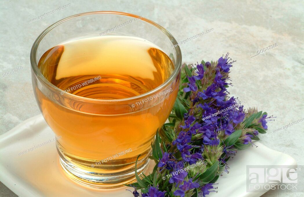 Stock Photo: tea made of Hyssop - medicinal plant - herbtea - medicinal tea - Hyssopus officinalis - Issopo - te.