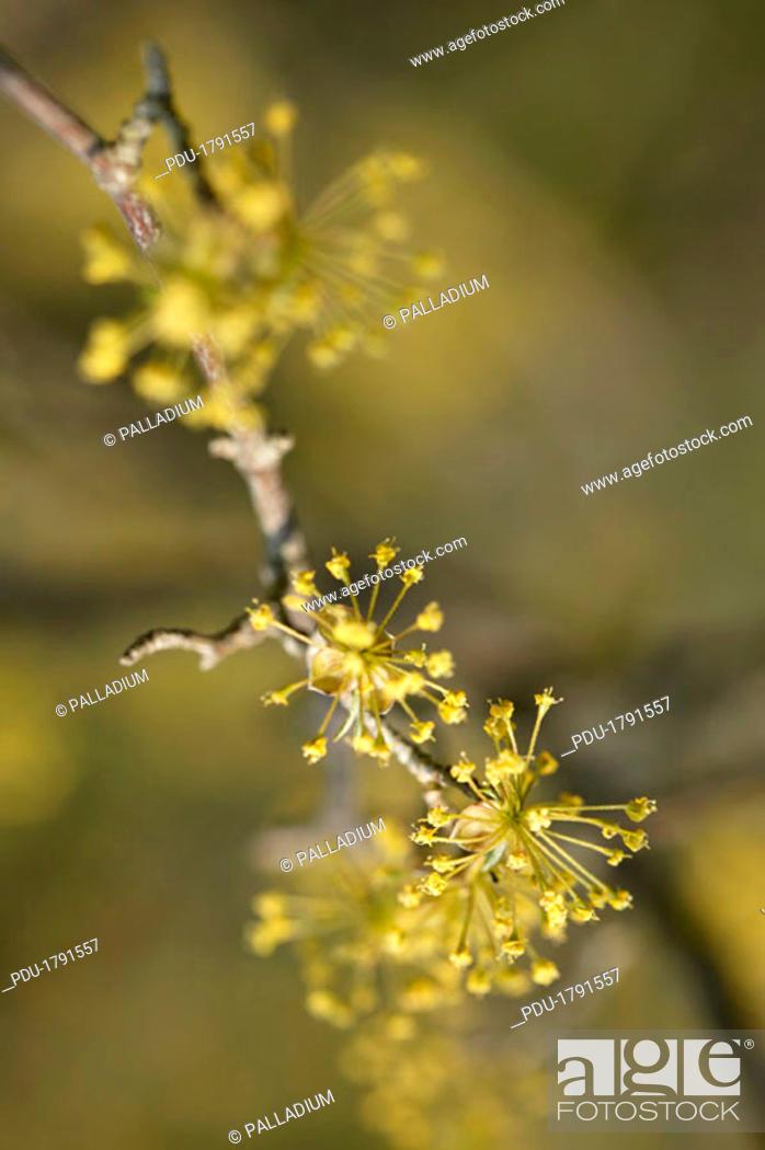 Stock Photo: Flowering tree.