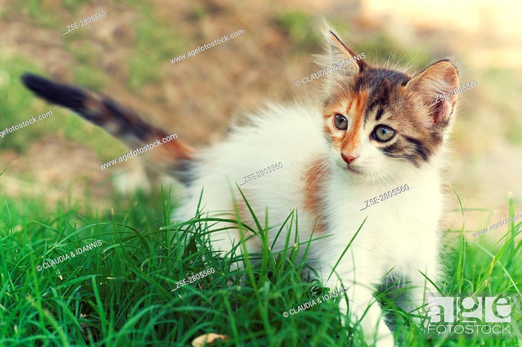 Stock Photo: A calico kitten in the garden.