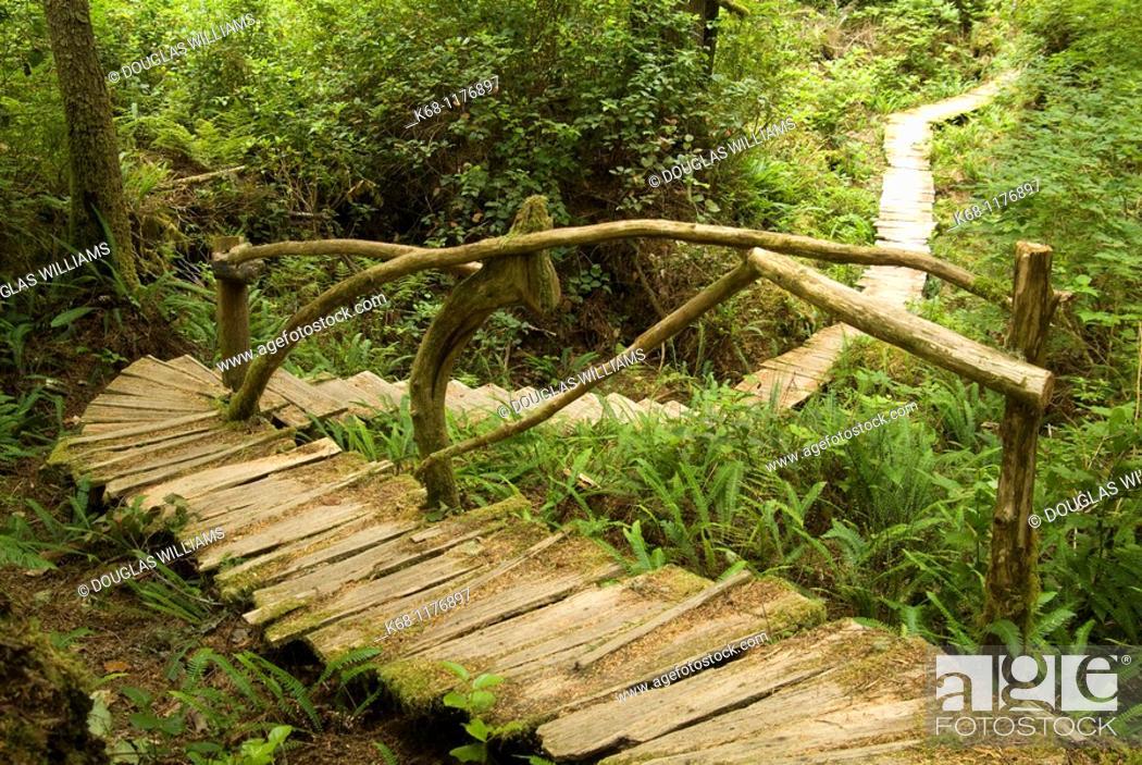 Stock Photo: boardwalk in forst, West Coast, Flores Island, British Columbia, Canada.