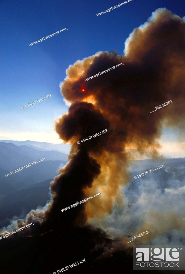 Stock Photo: Forest fire. California, USA.