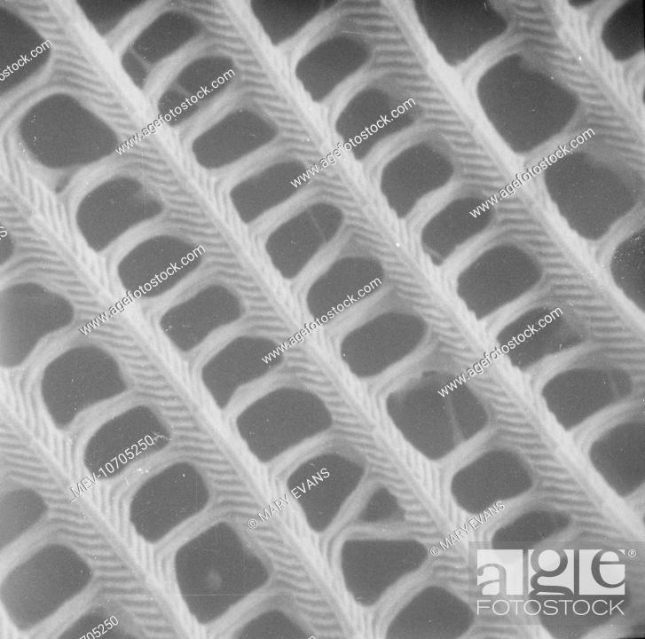 Scanning Electron Microscope Sem Image Of A Butterfly Wing Scale