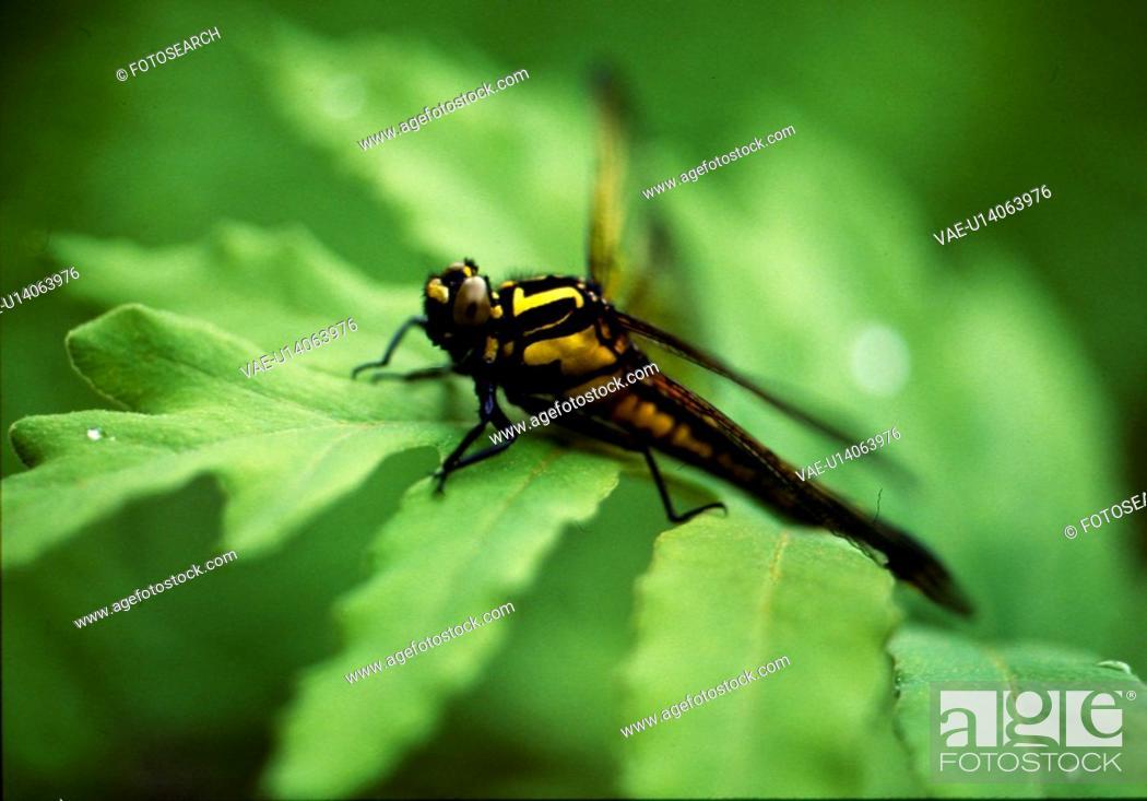 Stock Photo: arthropod, nature, animal, leaf, scene, anthropods, landscape.