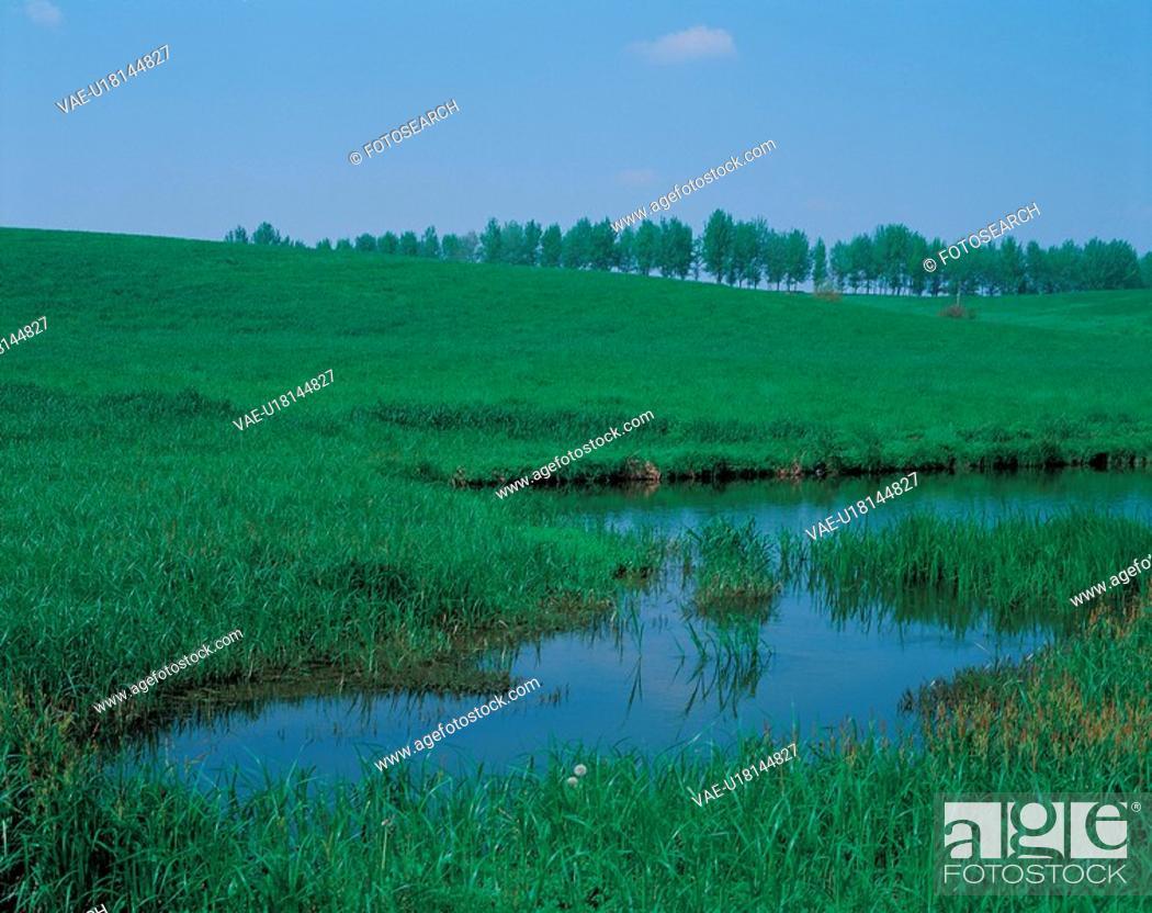 Stock Photo: tree, landscape, scenery, swamp, field.