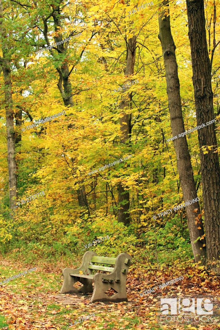 Stock Photo: A park bench in a forest preserve in autumn with leaves scattered on the ground.