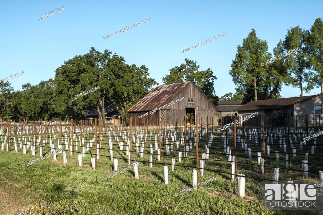Stock Photo: Fields of Napa Valley, California.