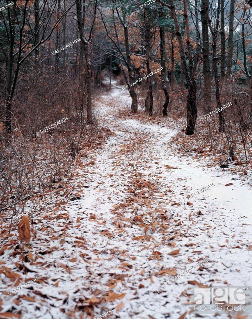 Stock Photo: tree, scenery, snow, winter, road, natural world, nature.