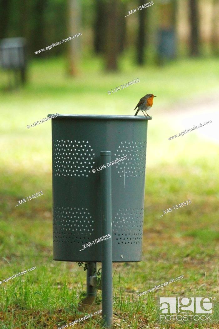 Stock Photo: A robin sits on a paper.