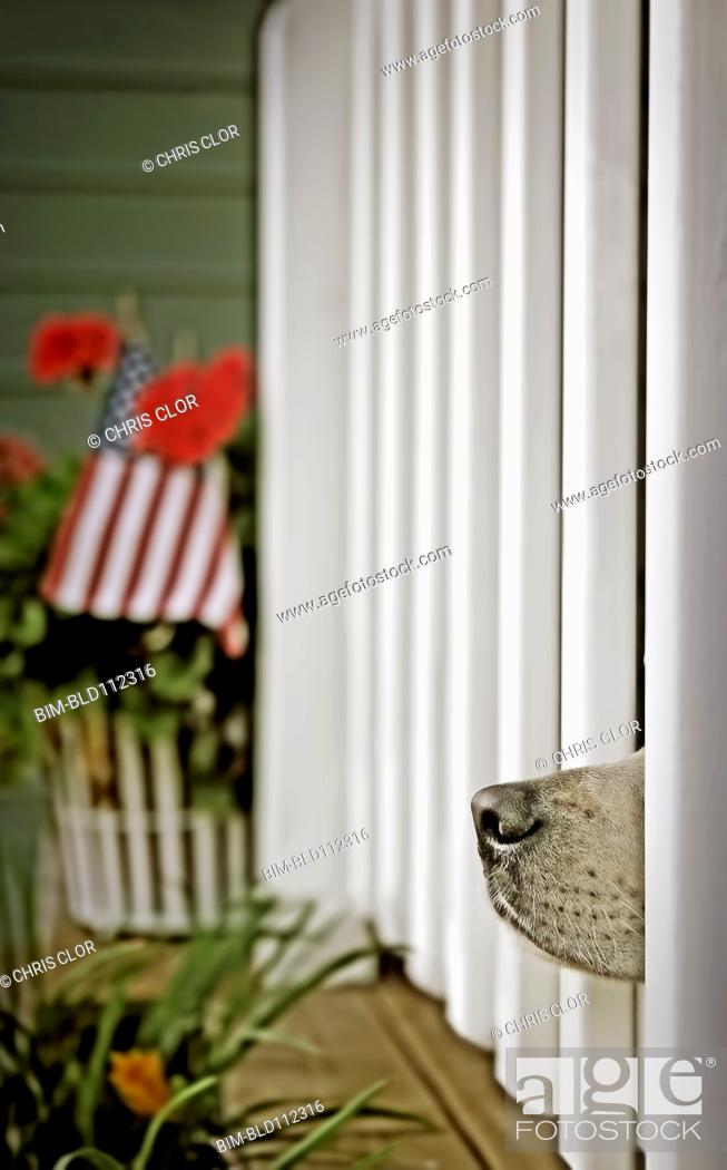 Stock Photo: Dog's nose peeking out from fence posts.