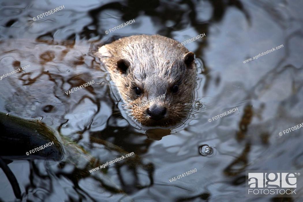 Stock Photo: ueber, animal, dive, germany, head, kempf, lake.