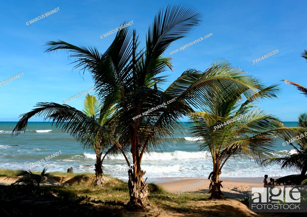 Stock Photo: Palm trees are seen at the coast in Costa do Sauipe, Brazil, 03 December 2013. The final draw for the preliminary round groups of the 2014 FIFA world cup Brazil.