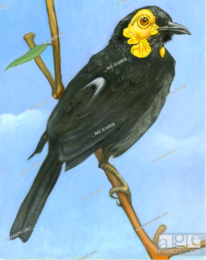 Stock Photo: An illustration of a honeyeater.