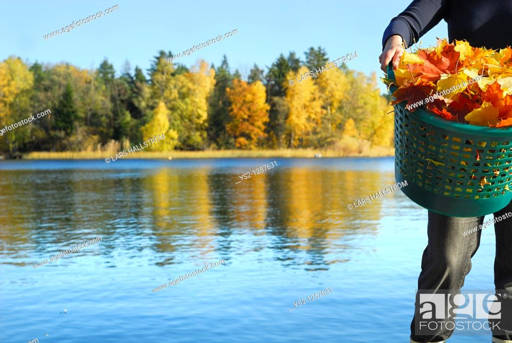 Stock Photo: Woman holding basket filled with autumn leaves in front of lake, Stockholm, Sweden, Europe.