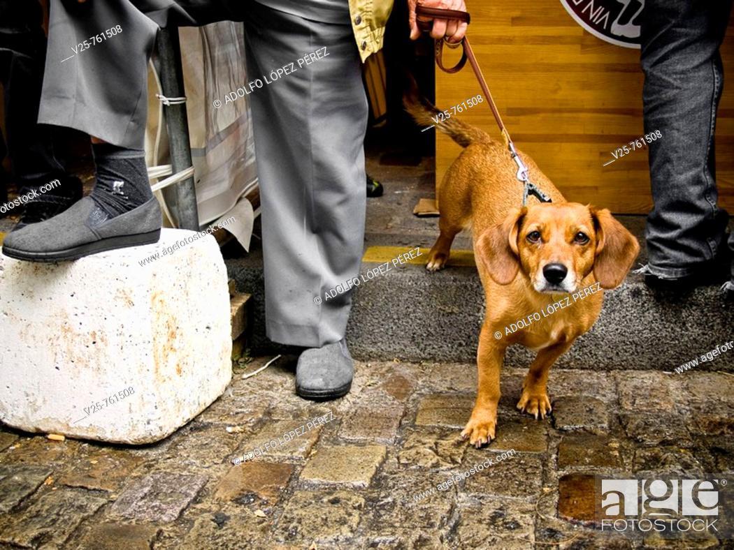 Stock Photo: Walking the dog, Paris, France.