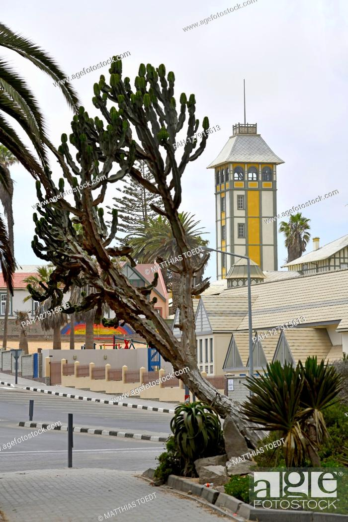 Stock Photo: Large succulent crop in the street image of Swakopmund, in the background the Damara tower, which formerly belonged to the Woermann trading house and allowed.
