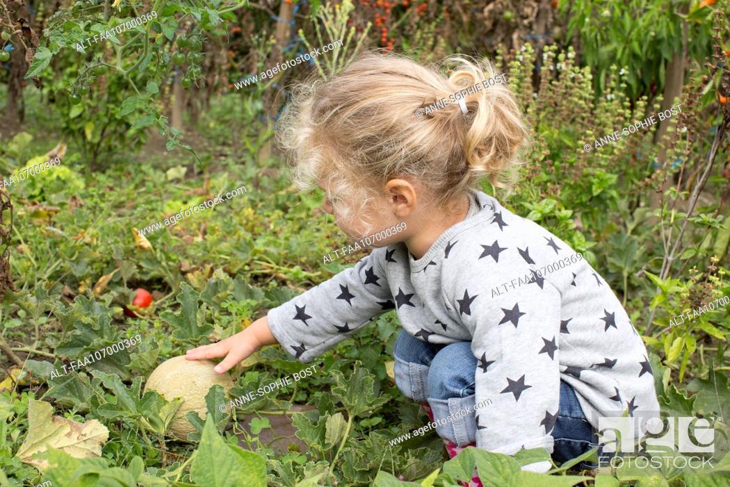 Stock Photo: Girl picking cantaloupe.
